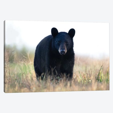 Black Bear Cub Canvas Print #ERF16} by Eric Fisher Art Print