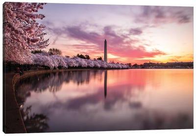 Cherry Blossoms Washington Monument Canvas Art Print