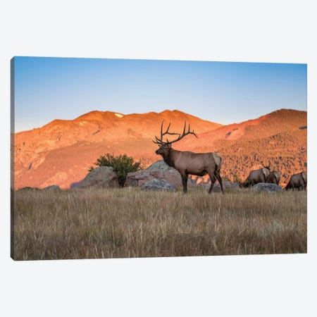Elk In The Rocky Mountains Canvas Print #ERF25} by Eric Fisher Canvas Artwork