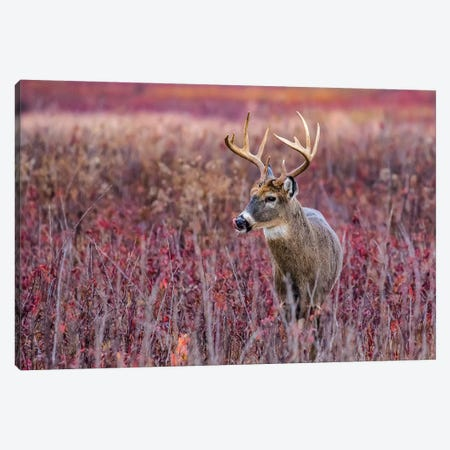 Fall Buck Deer Canvas Print #ERF26} by Eric Fisher Canvas Art