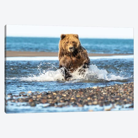 Fishing Bear Canvas Print #ERF27} by Eric Fisher Canvas Artwork