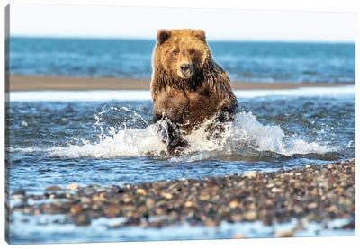 Fishing Bear Canvas Art Print