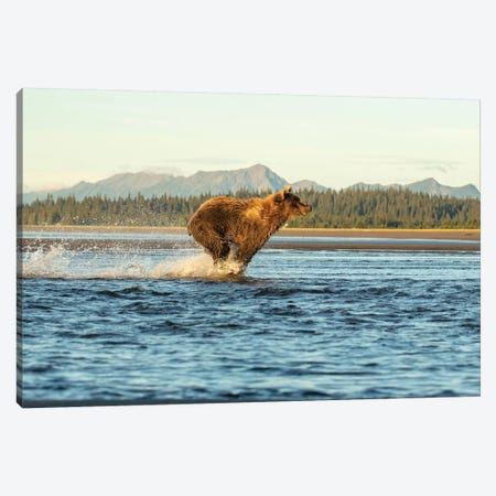 Alaska Bear Running Canvas Print #ERF2} by Eric Fisher Canvas Art Print