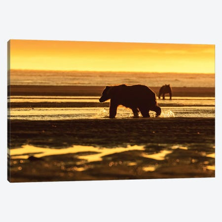 Golden Bear Canvas Print #ERF31} by Eric Fisher Canvas Artwork