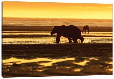 Golden Bear Canvas Art Print