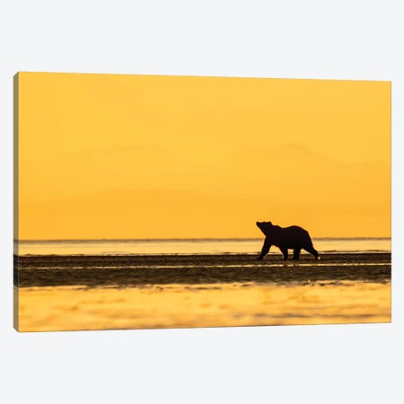 Grizzly Bear Golden Canvas Print #ERF35} by Eric Fisher Art Print
