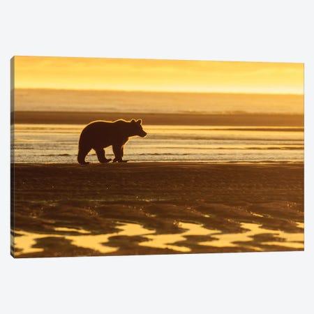 Morning Beach Bear Canvas Print #ERF46} by Eric Fisher Canvas Art