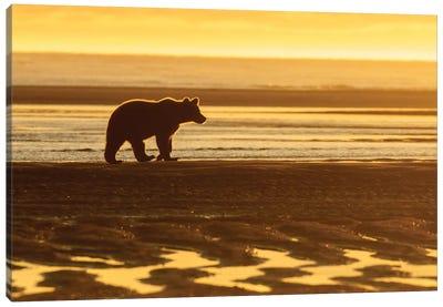 Morning Beach Bear Canvas Art Print