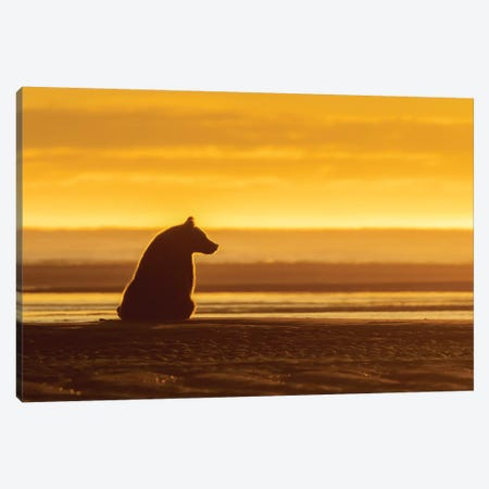 Morning Grizzly Bear Canvas Print #ERF47} by Eric Fisher Canvas Wall Art