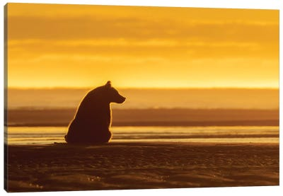 Morning Grizzly Bear Canvas Art Print