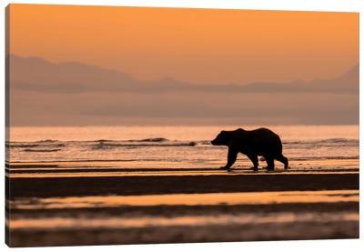 Orange Alaska Bear Canvas Art Print