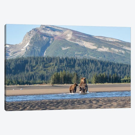 Alaska Bears And Mountain Canvas Print #ERF4} by Eric Fisher Canvas Art