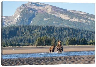 Alaska Bears And Mountain Canvas Art Print