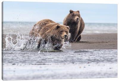 Running Bear Canvas Art Print