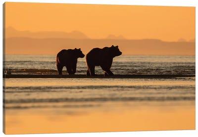 Two Bears On The Beach Canvas Art Print