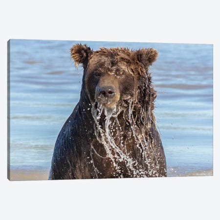 Wet Grizzly Bear Canvas Print #ERF61} by Eric Fisher Art Print