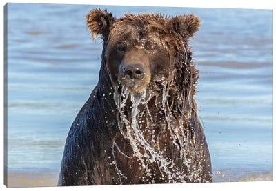 Wet Grizzly Bear Canvas Art Print