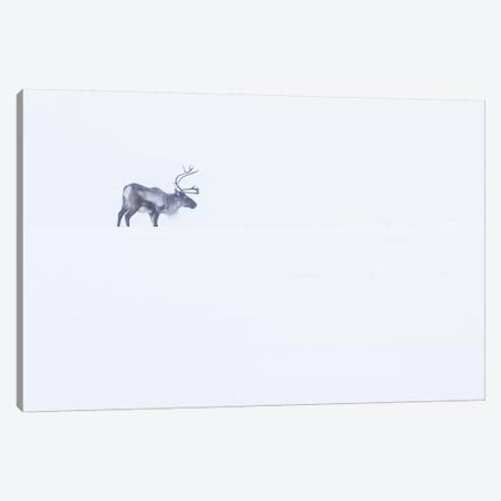 White Reindeer Canvas Print #ERF63} by Eric Fisher Art Print