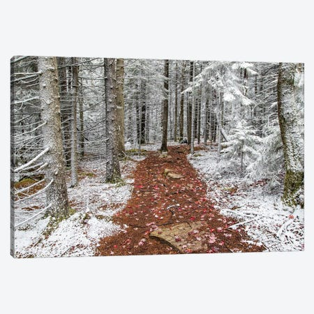 Winter And Fall Canvas Print #ERF64} by Eric Fisher Canvas Artwork