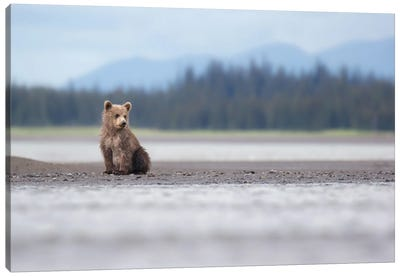 Alaska Bear Cub And Mountains Canvas Art Print