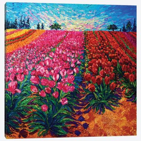Fields In Bloom Canvas Print #ERY14} by Eryn Tehan Canvas Art