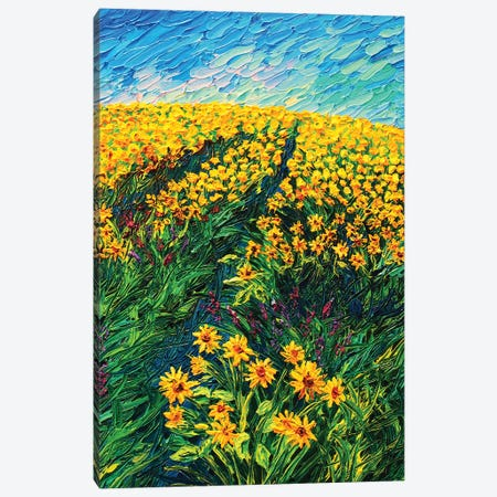 Sunflower Trail Canvas Print #ERY43} by Eryn Tehan Canvas Wall Art
