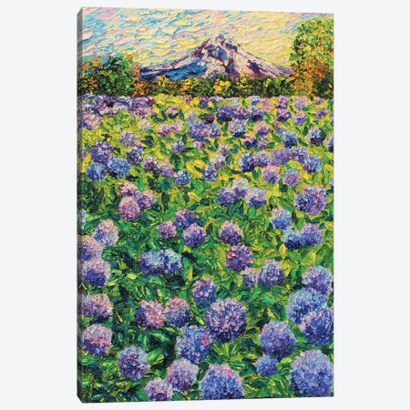 Hydrangea Fields Canvas Print #ERY67} by Eryn Tehan Canvas Art Print