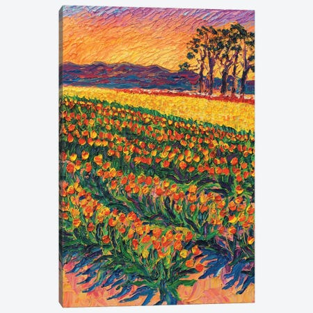 Sunset Tulips Canvas Print #ERY68} by Eryn Tehan Canvas Artwork