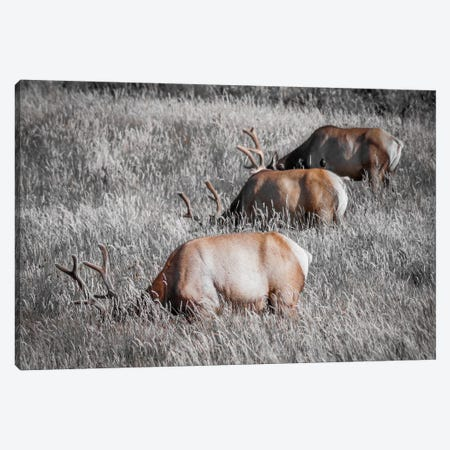 Grazing in a Field of Gray Canvas Print #ESC10} by Eric Schech Canvas Wall Art