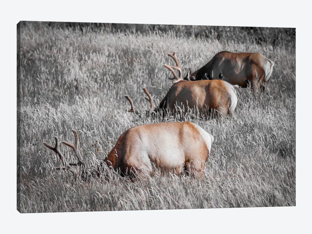 Grazing in a Field of Gray 1-piece Art Print