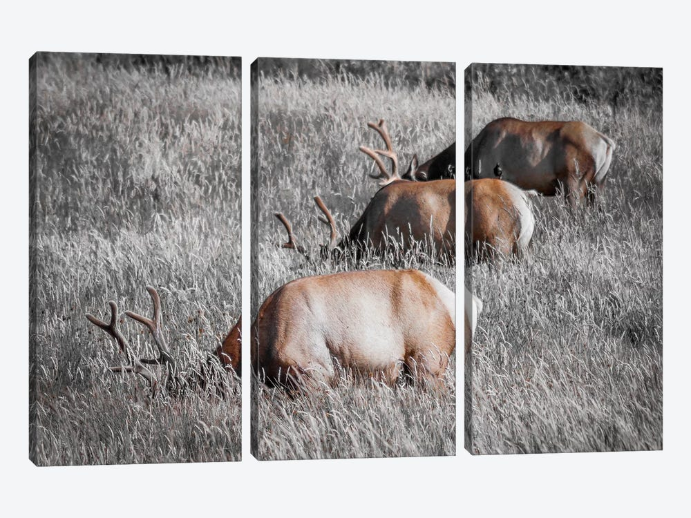 Grazing in a Field of Gray 3-piece Canvas Print