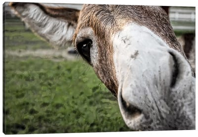 Friendly Donkey Canvas Art Print