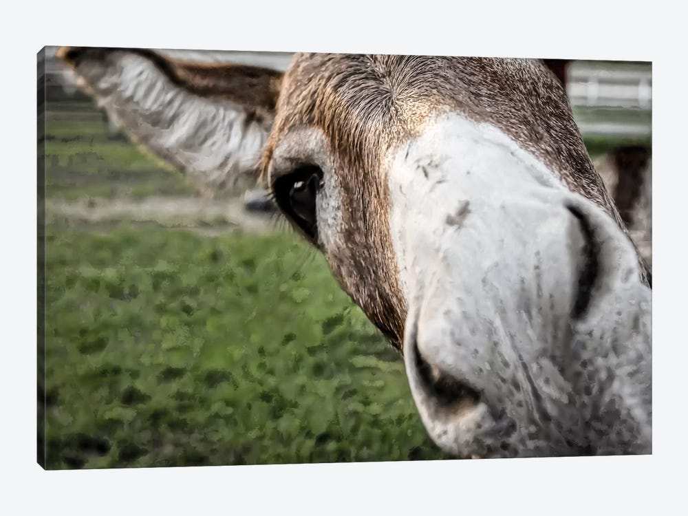 Friendly Donkey by Eric Schech 1-piece Canvas Wall Art