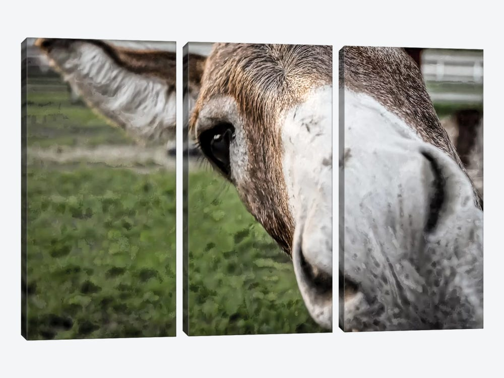 Friendly Donkey by Eric Schech 3-piece Canvas Art