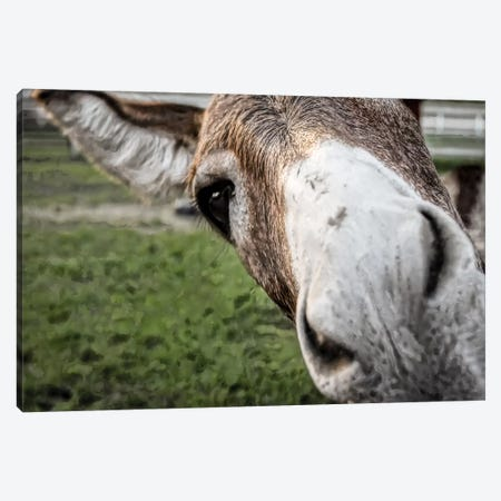 Friendly Donkey Canvas Print #ESC19} by Eric Schech Canvas Art