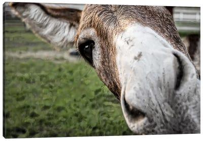 Friendly Donkey Canvas Art Print