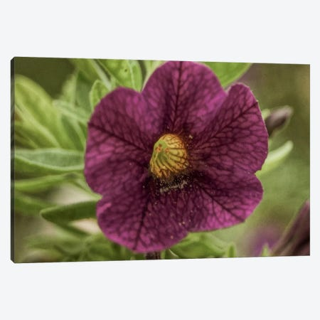 Pollen Petals 3-Piece Canvas #ESC20} by Eric Schech Art Print