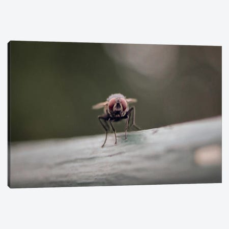 Gotta Stay Fly Canvas Print #ESC22} by Eric Schech Art Print
