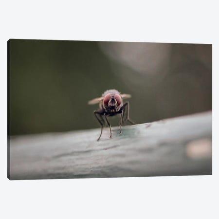 Gotta Stay Fly Canvas Print #ESC22} by Eric Schech Art Print