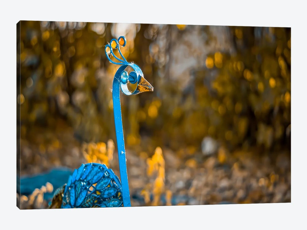 Peacock 1-piece Canvas Print