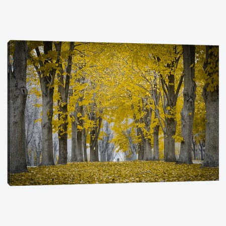 Fall Falling Canvas Print #ESC46} by Eric Schech Canvas Artwork