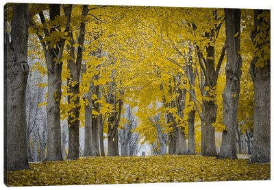 Fall Falling Canvas Art Print