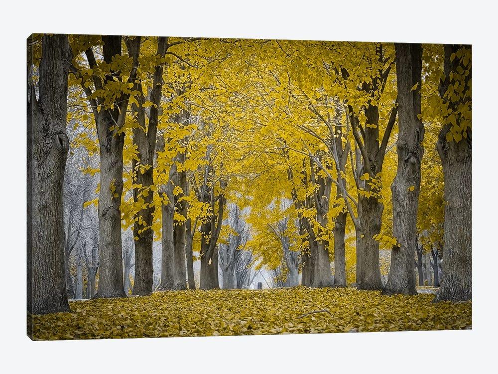 Fall Falling by Eric Schech 1-piece Canvas Art