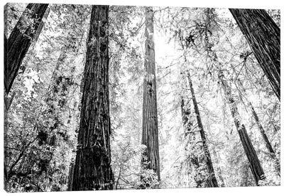 Amongst the Giants Canvas Print #ESC57
