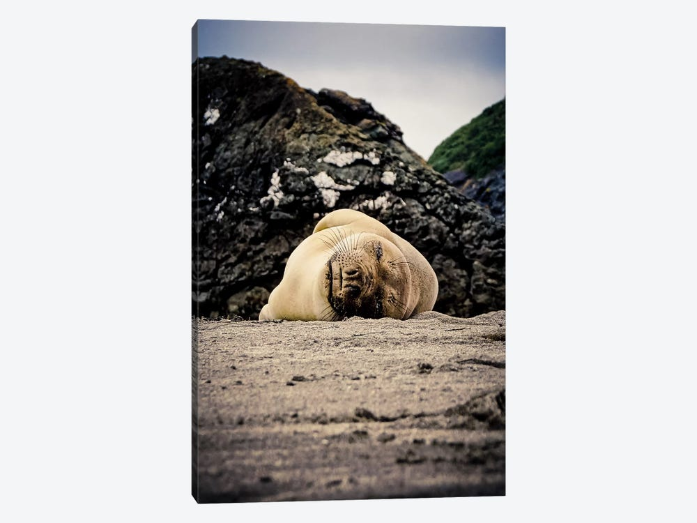 Steller Sea Lion by Eric Schech 1-piece Canvas Wall Art