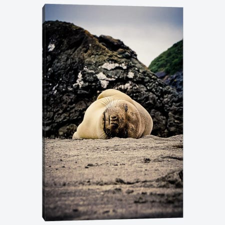 Steller Sea Lion Canvas Print #ESC5} by Eric Schech Canvas Wall Art