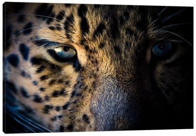 Leopard Prowl Canvas Art Print