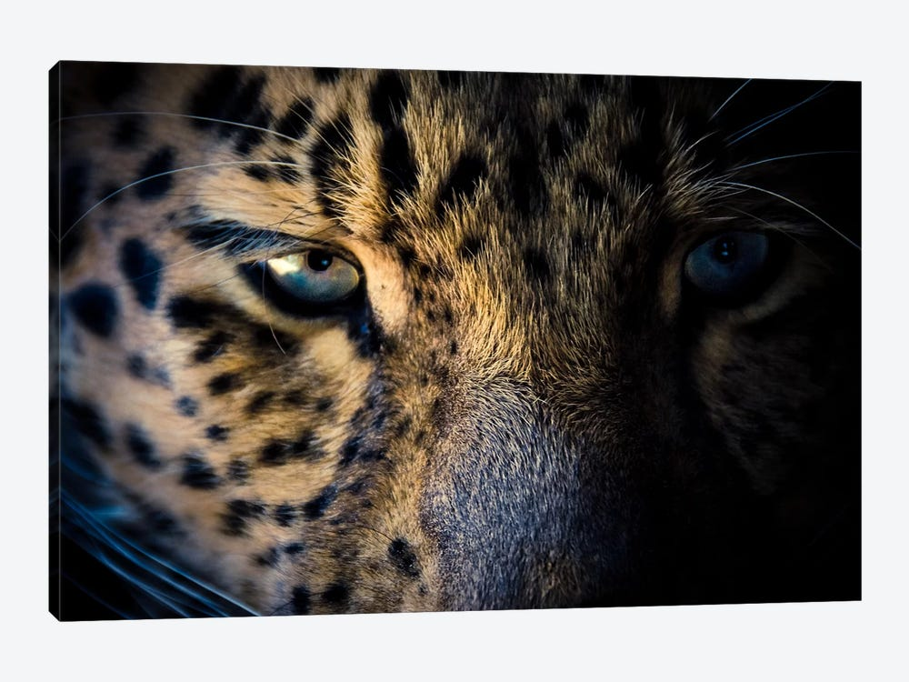 Leopard Prowl by Eric Schech 1-piece Canvas Art