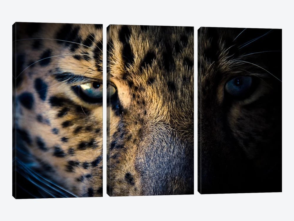 Leopard Prowl by Eric Schech 3-piece Canvas Wall Art