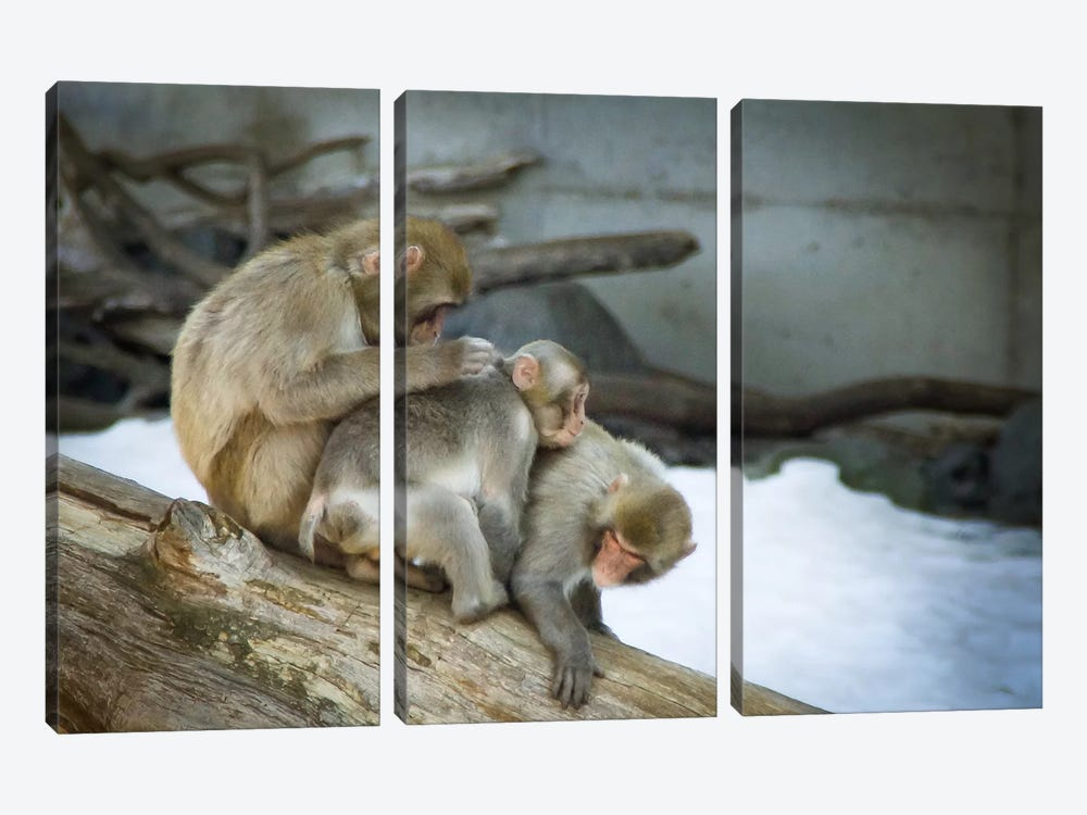 Stay Together by Eric Schech 3-piece Canvas Print